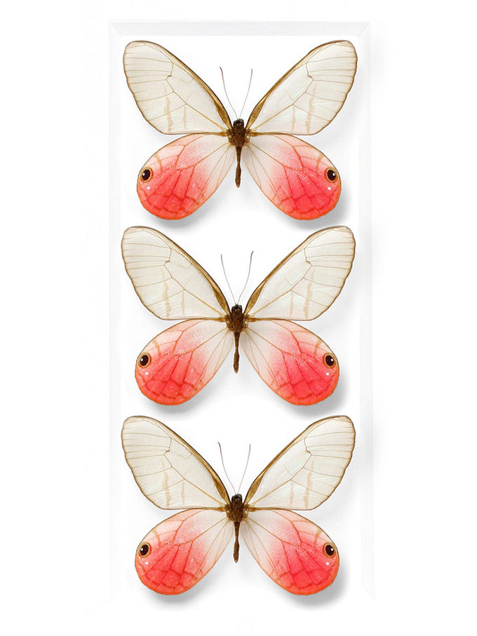 Insects – Page 3 – CHRISTOPHER MARLEY | Pheromone Gallery