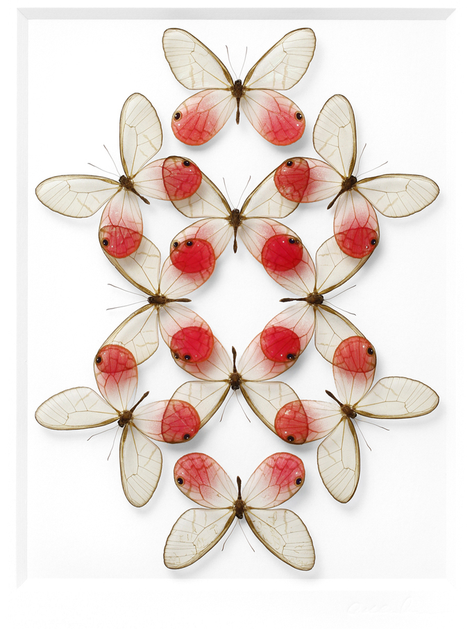 Insects – CHRISTOPHER MARLEY | Pheromone Gallery