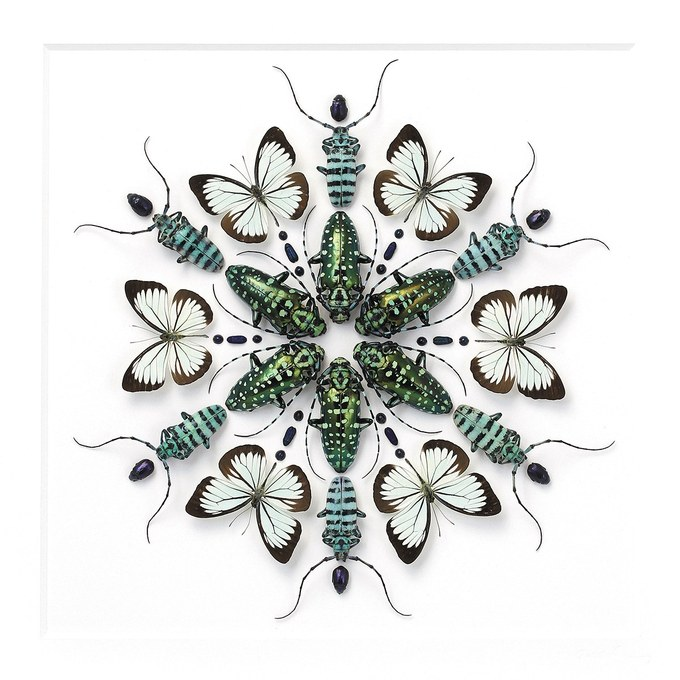 Insects – Page 4 – CHRISTOPHER MARLEY | Pheromone Gallery